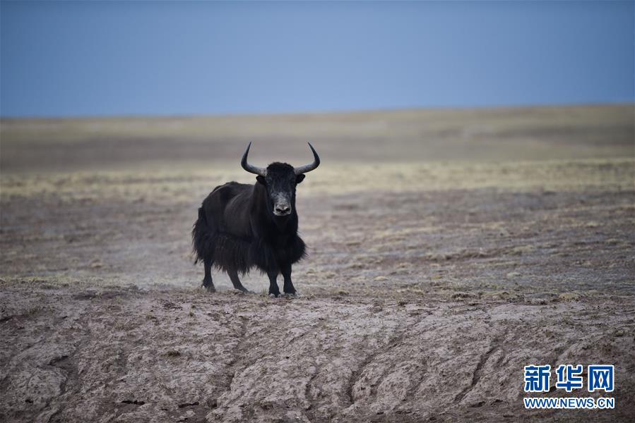 中国青海省可可西里正式列入世界遗产名录