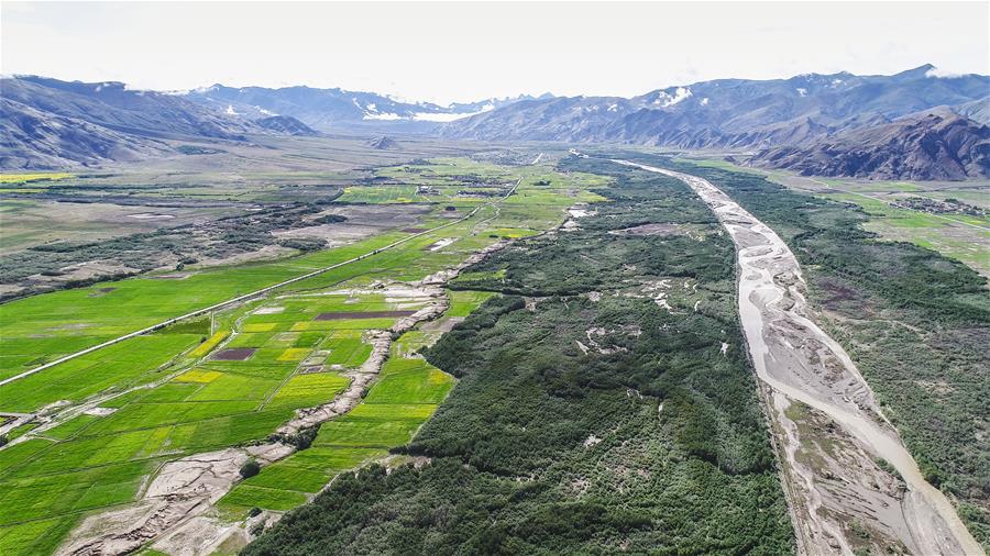 """风沙地里""""长出""""绿色家园——西藏山南隆子县53年造林治沙记"""