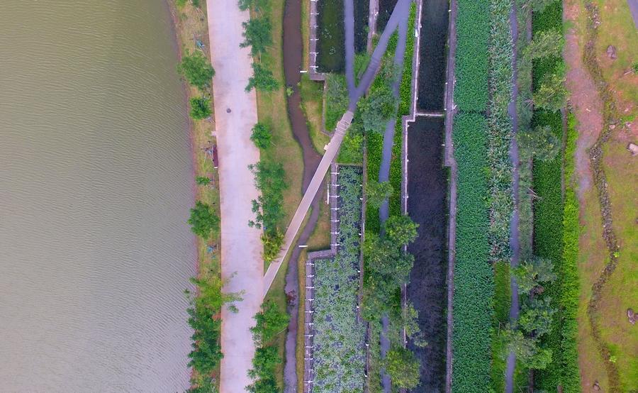 """【新时代幸福美丽新边疆】海口美舍河凤翔湿地公园:把""""梯田""""搬到市民家门口"""