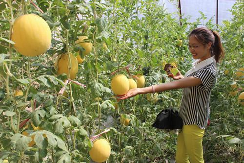 线上赌博平台现场赌博:宁夏农业特色产业发展纪实